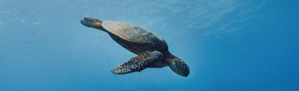 La navegación sostenible ayuda a conservar la diversidad marina